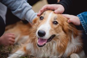 Kids and dogs and how to foster a good relationship with pets