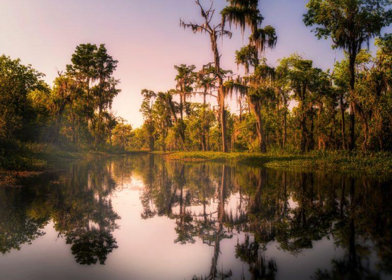 Deep in the Heart of … Louisiana?