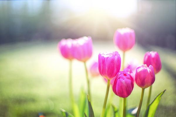 spring flowers during coronavirus quarantine