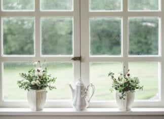 Window with plants